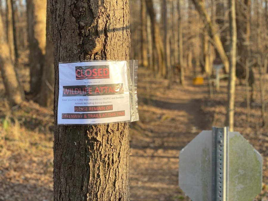 Possible coyote threatens people on trails near Lake Brandt Marina in Greensboro; area closed while officials try to capture animal