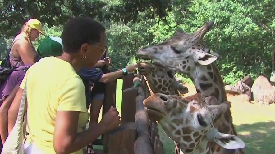 Missed the North Carolina Zoo? All attractions will be open this season