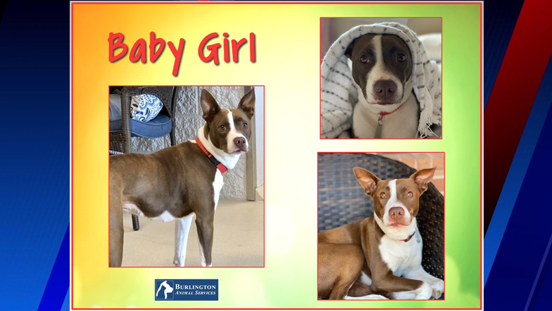 If you're searching for the 'perfect snuggle and movie buddy,' look no further than Baby Girl!