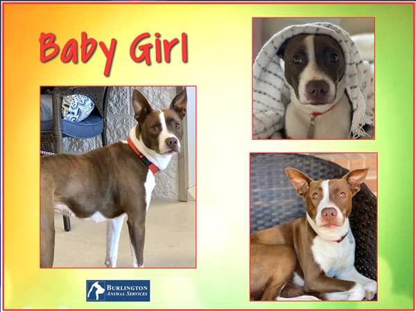 Looking for you 'perfect snuggle and movie buddy'? Look no further than Baby Girl!