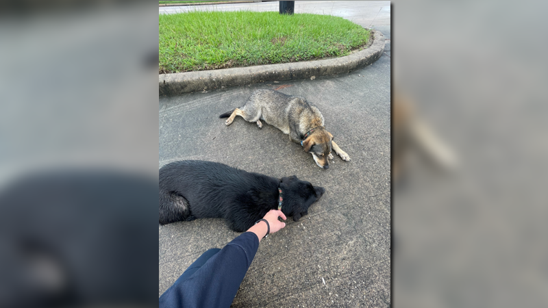 Deputy reunites lost puppies with owner