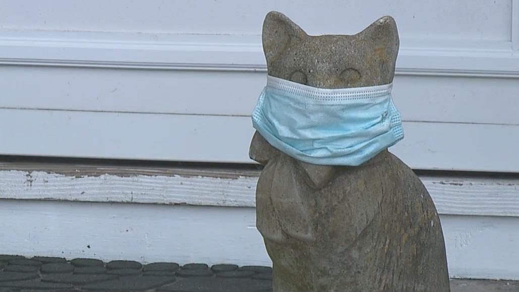 A cat wearing a mask