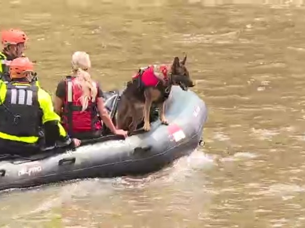 Canine assists with search on Dan River