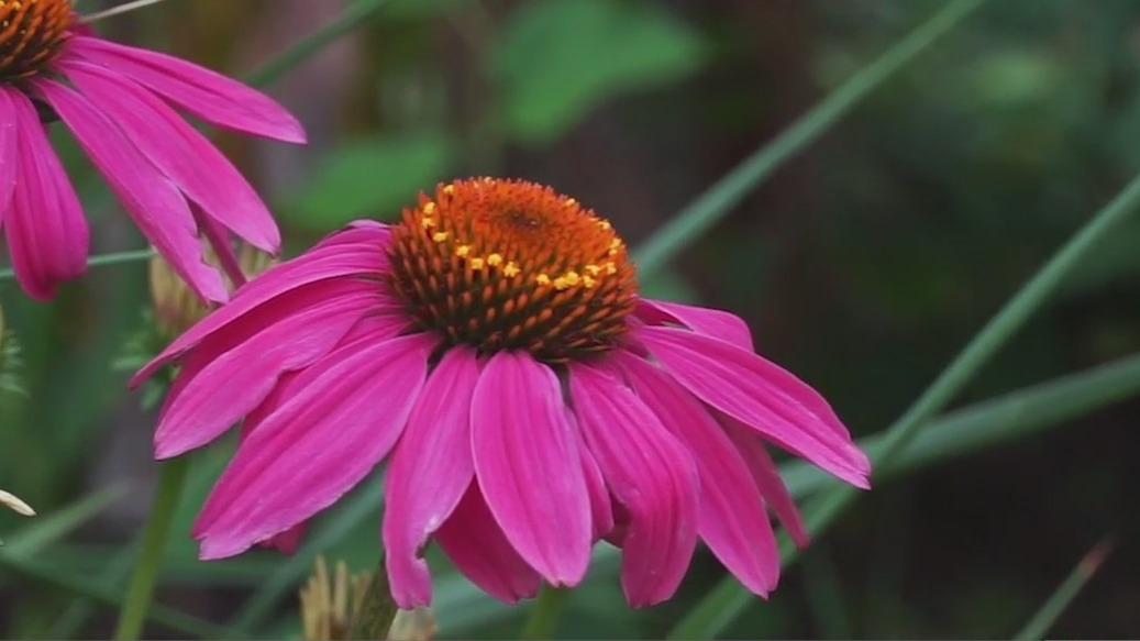 Ciener Botanical Gardens