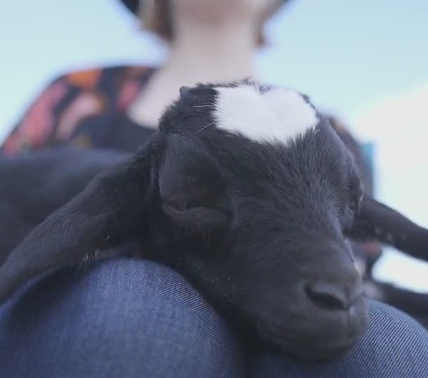 Meet 'the third kid' in this Davidson County Family: Winny the goat