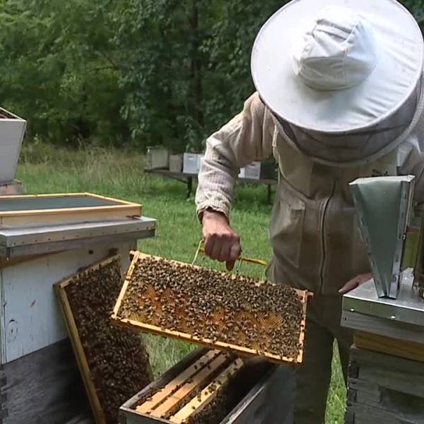Growing High Point excited for new beekeeping program
