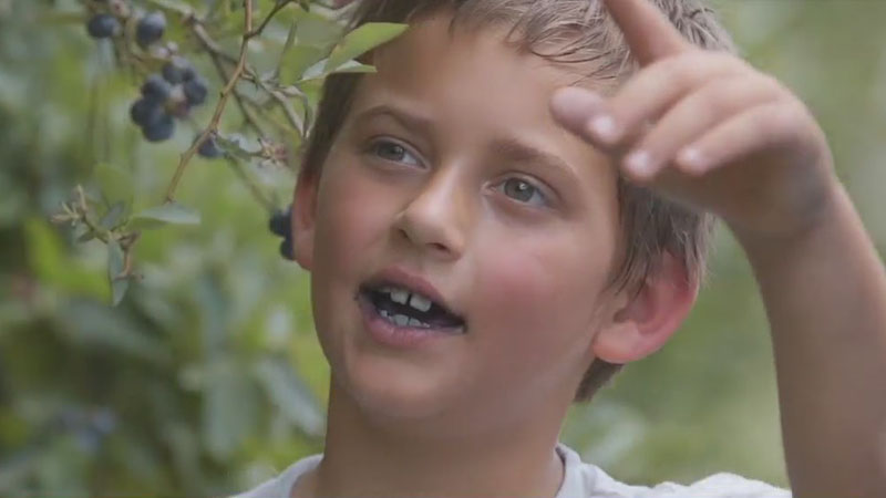 Meet 'Little Boy Blue(berry),' Davidson County's 7-year-old expert in blueberry picking