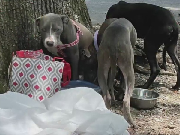 Three young dogs euthanized after being abandoned at Latham Park in Greensboro