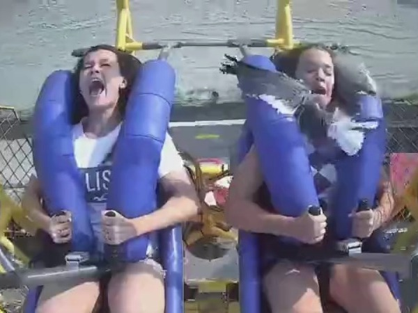 Caught on camera: Seagull smacks girl in face on amusement park ride