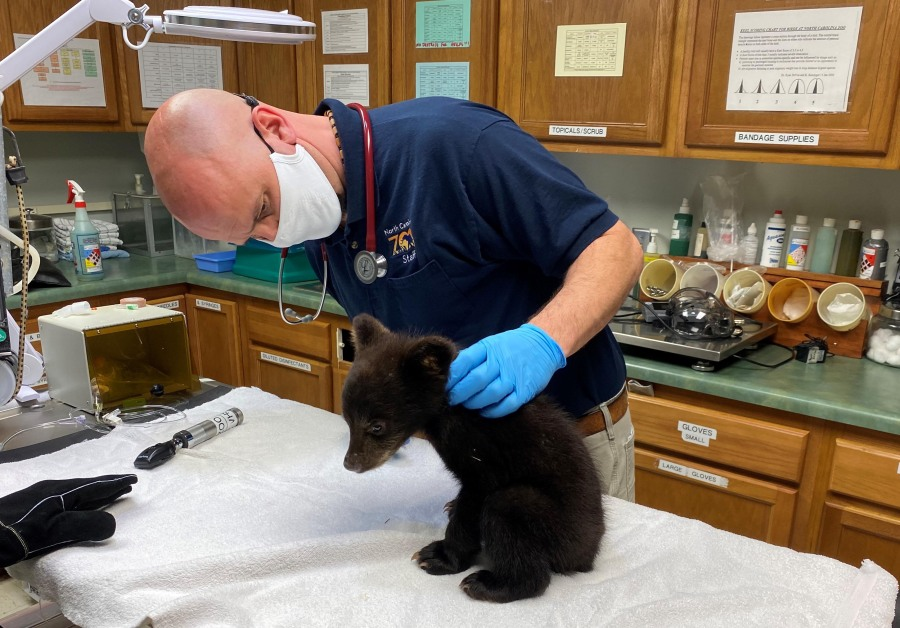 Chief Veterinarian Dr. Jb Minter with some of the animal species receiving the vaccinations. (Courtesy of the North Carolina Zoo)
