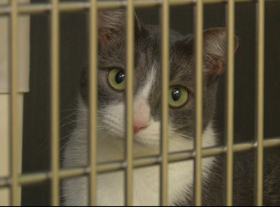 52 cats euthanized in NC shelter due to medical condition