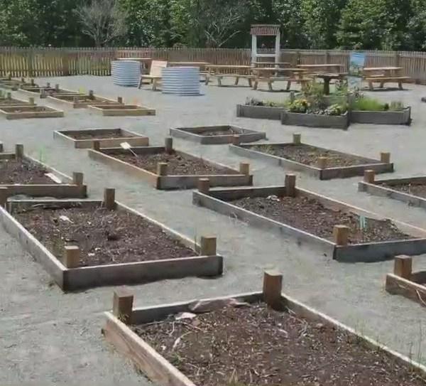 Schoolyard garden gives Elon Elementary School students room to grow