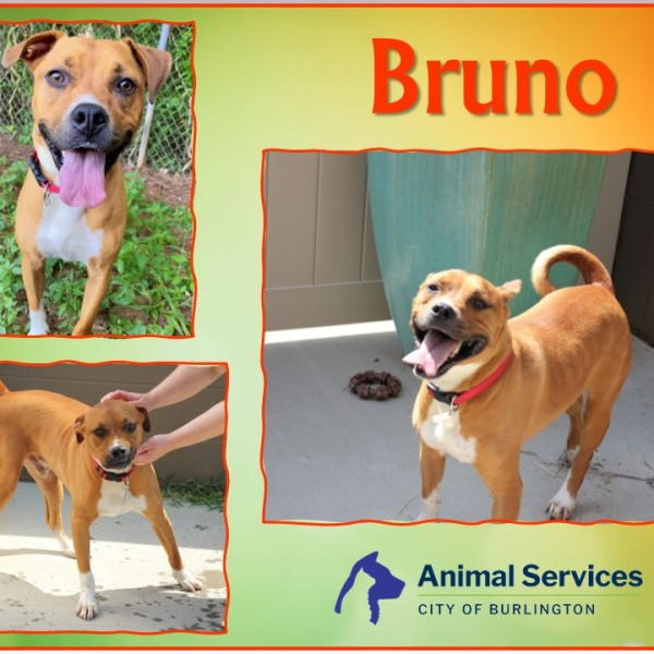 Bruno is our pet of the week!