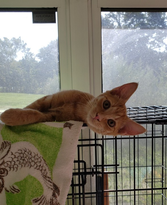 3 sweet kittens seek a home; maybe one with a wagging dog tail for them to play with