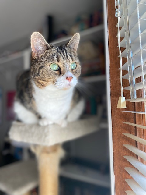 """Our editor Kennedy's Khaleesi is watching """"cat TV"""" aka the birds outside his window!"""