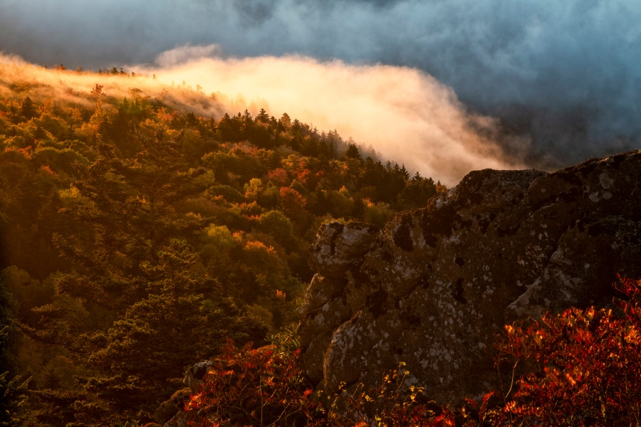 Leaves change colors at Grandfather Mountain. (Photos by Skip Sickler   Grandfather Mountain Stewardship Foundation)