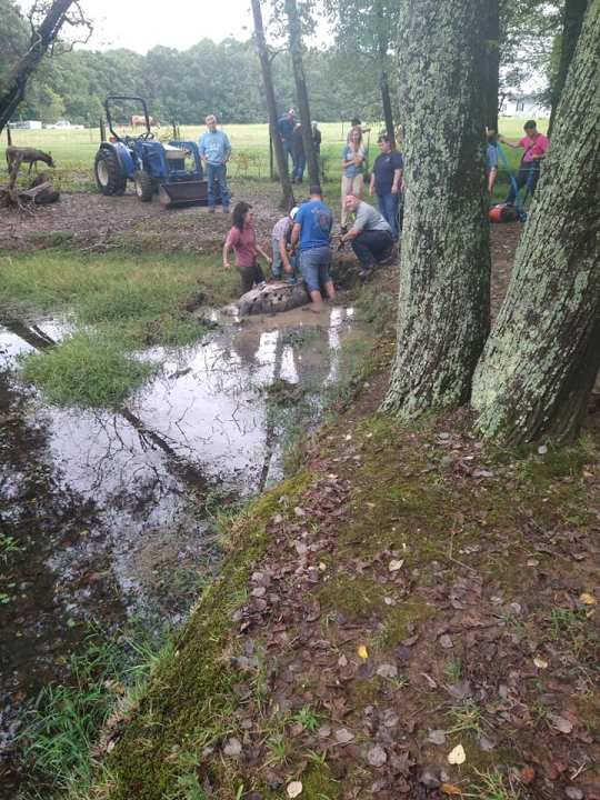 Fire crews rescue exhausted horse stuck in muddy pond in Randolph County (Guil-Rand Fire Department/Facebook)