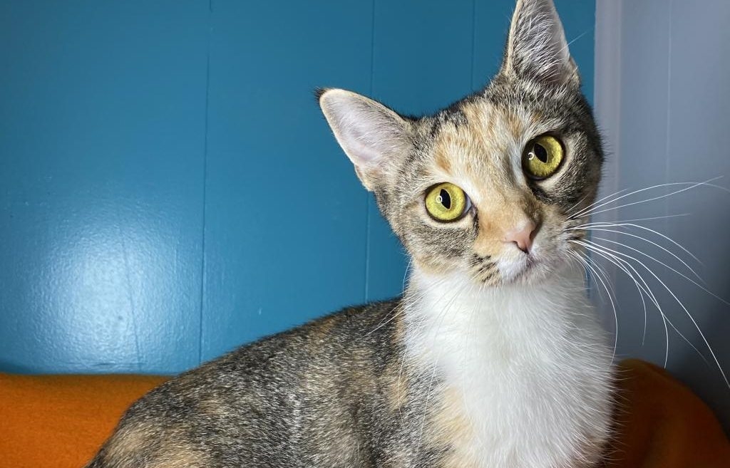 Audrey is our pet of the week