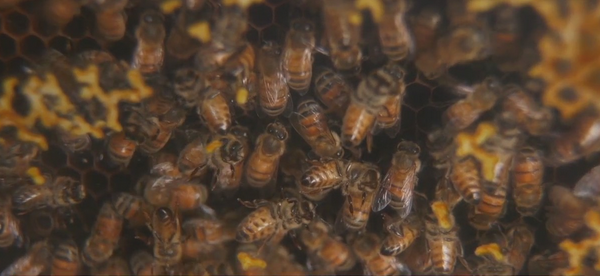 Hidden Happiness Bee Farm in Wilkes County has country store, museum dedicated to bees